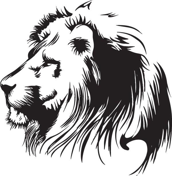 画威武的狮子的步骤