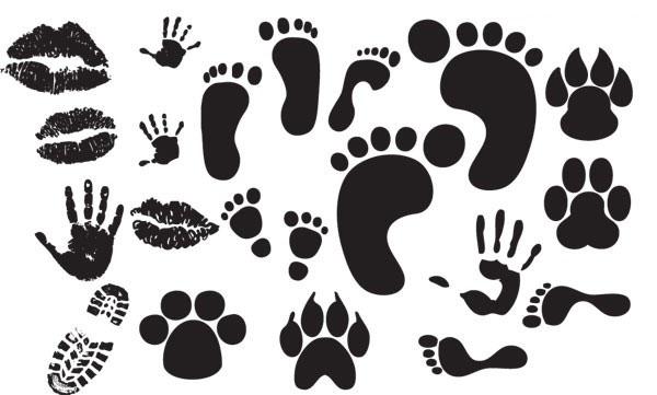 2014各种动物脚印图案各种动物脚印图案 动物脚印图片