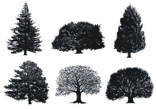 cdr格式树木精细素描