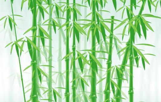 带竹叶的竹子简笔画展示